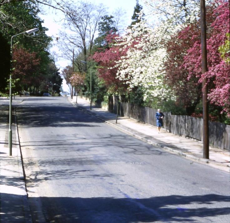 Oakleigh Park South, N20