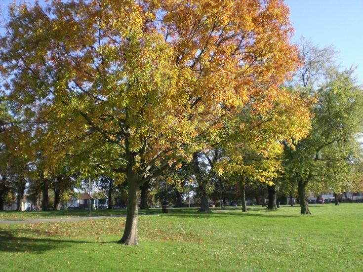 Friary Park.
